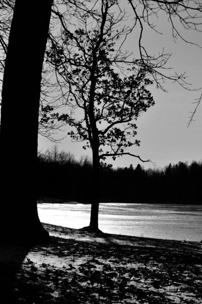 Lone Tree - Mendon Ponds