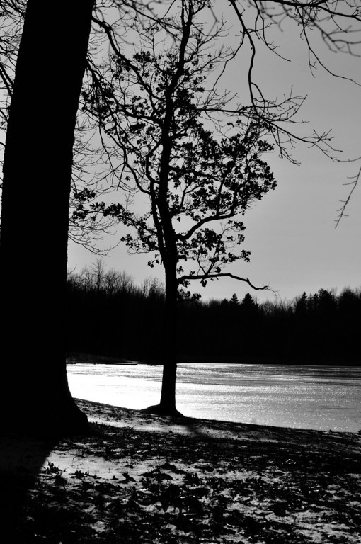 Lone Tree - Mendon Ponds