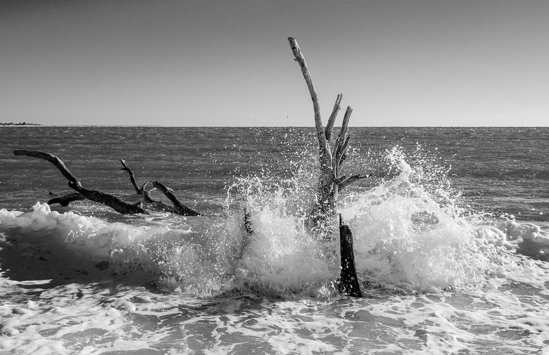 Driftwood in Surf