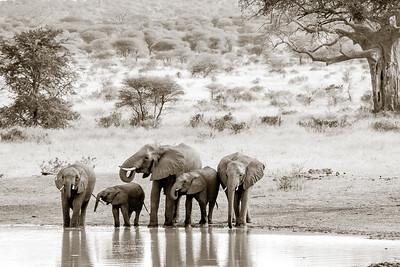 Elephant Bar 4682bws