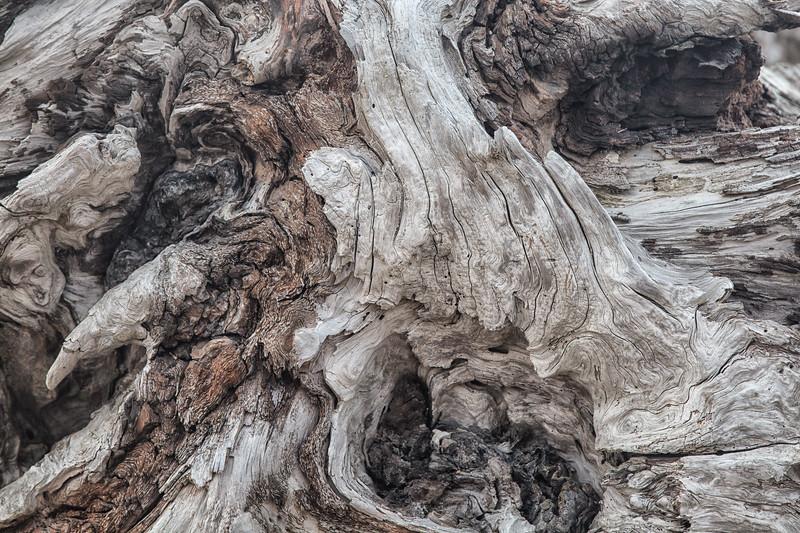 Driftwood detail #1