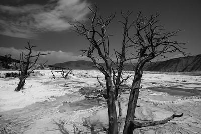 Mammoth Hot Springs in Yellowstone Naitonal Park in Wyoming.  Photo by Kyle Spradley | www.kspradleyphoto.com