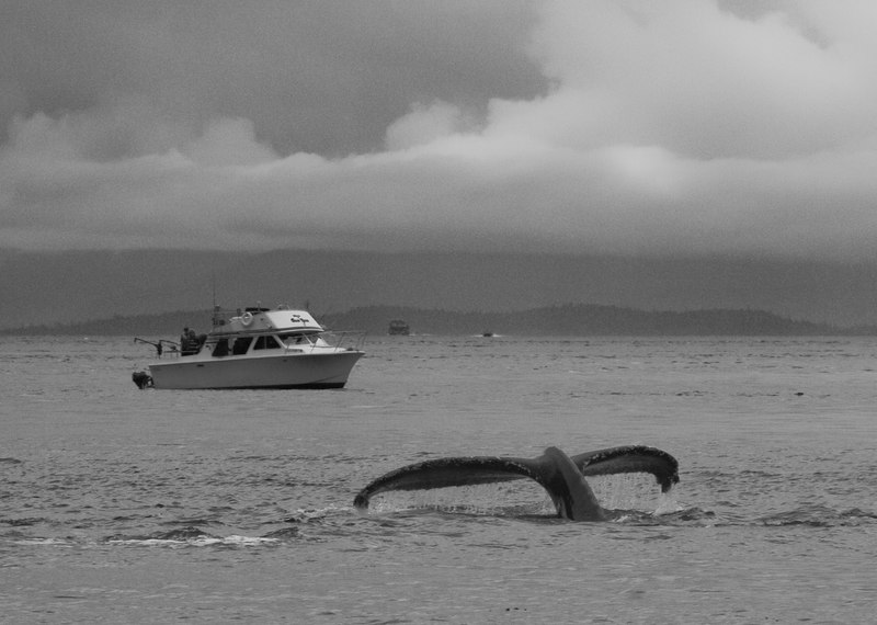 boat and whale in Lynn Canal