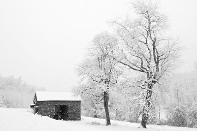 A Wintery Contrast