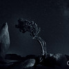 Bending to Eternity: Juniper and Rock Joshua Tree