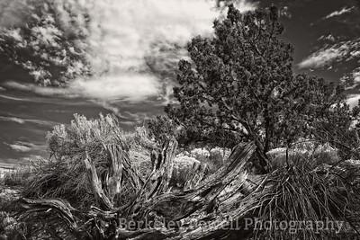 Cedar, Sagebrush & Rabbit Bush