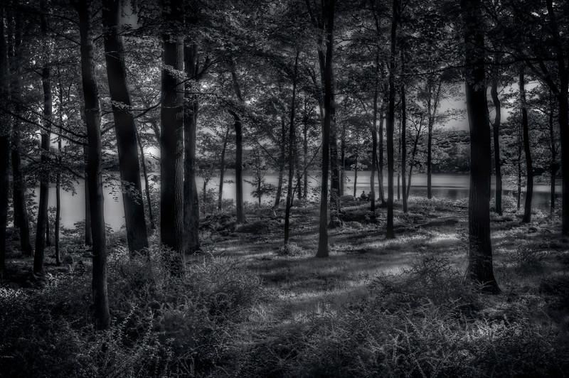 Hidden In The Trees