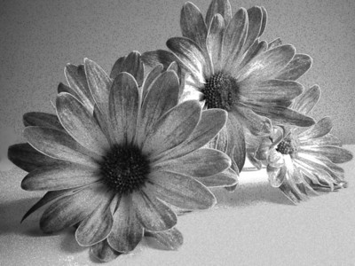 Grainy Flowers