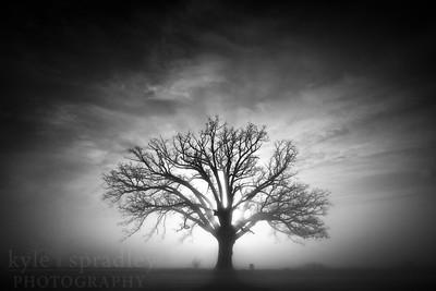 Oak Frost