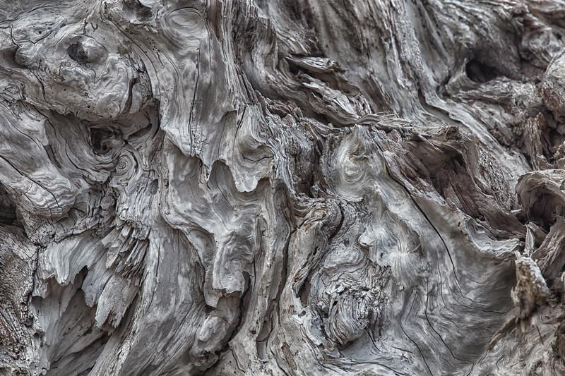 Driftwood Detail #3