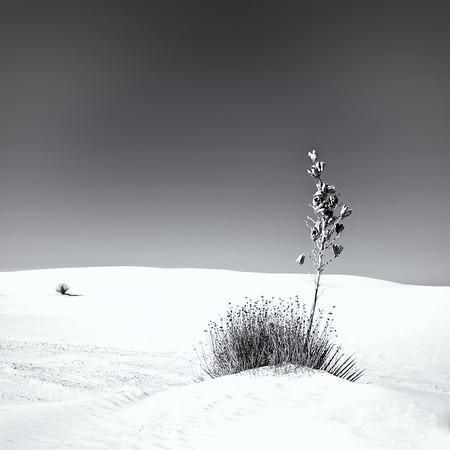 Life - White Sands