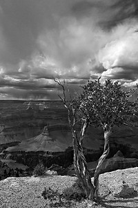 Late afternoon light at Grand Canyon National Park, viewed from Powell Point.  © Kyle Spradley Photography | www.kspradleyphoto.com