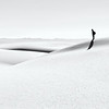 Solitary - White Sands, NM<br /> © Sharon Thomas