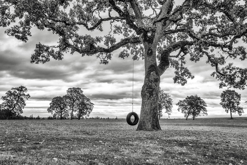 Swinging from the old oak tree
