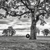 Swinging from the old oak tree