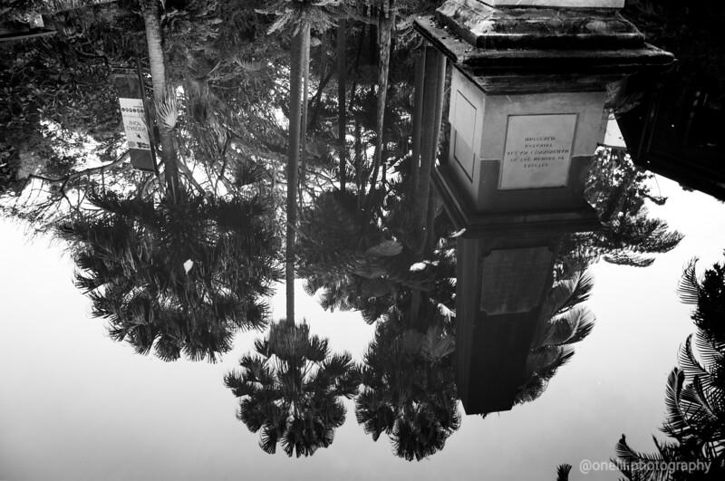 Reflective Gardens
