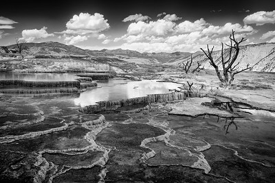 Mammoth Hot Springs during the summer in Yellowstone National Park. The impressive hillside of travertine terraces are formed from limestone. Thermal water rises through the limestone, carrying high amounts of the calcium carbonate. At the surface, carbon dioxide is released and calcium carbonate is deposited, forming travertine, the chalky white mineral forming the terraces. The colorful stripes located on the terraces are formed by thermophiles, or heat-loving organisms.  Photo by Kyle Spradley | ©Kyle Spradley Photography | www.kspradleyphoto.comMammoth Hot Springs during the summer in Yellowstone National Park. The impressive hillside of travertine terraces are formed from limestone. Thermal water rises through the limestone, carrying high amounts of the calcium carbonate. At the surface, carbon dioxide is released and calcium carbonate is deposited, forming travertine, the chalky white mineral forming the terraces. The colorful stripes located on the terraces are formed by thermophiles, or heat-loving organisms.  Photo by Kyle Spradley | ©Kyle Spradley Photography | www.kspradleyphoto.com