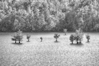 Lake Ocoee Trees BW 1