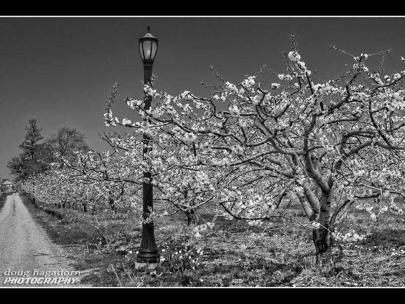 Blossum Lane