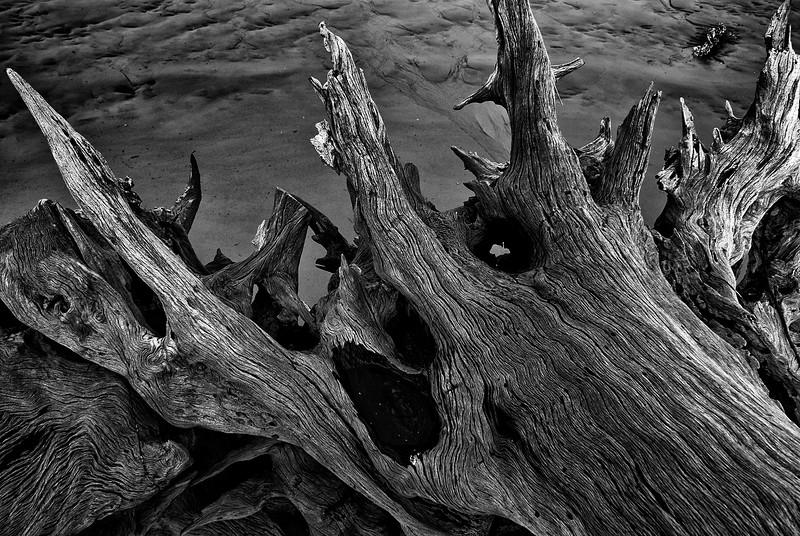 Driftwood at Talbot
