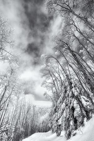 Winter - Santa Fe Ski Basin 5<br /> © Sharon Thomas