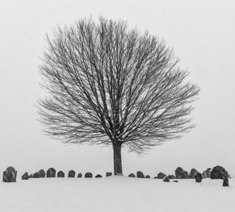 Newburyport cemetary in the snow