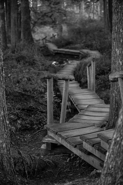 Woods along the Washington Coast