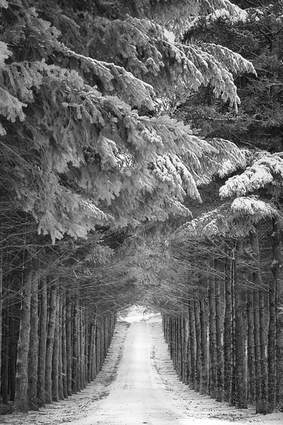 The road to Winter.