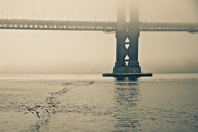 Birds in formation under the Bay Bridge