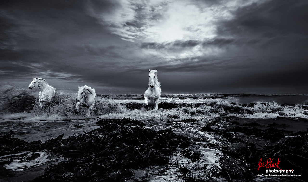 Ride the white horses...