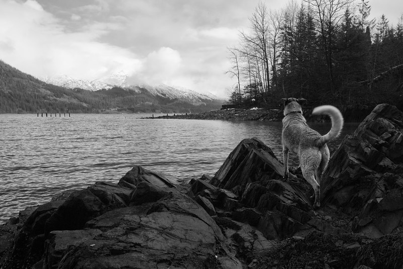 YellowDog at Gastineau Channel