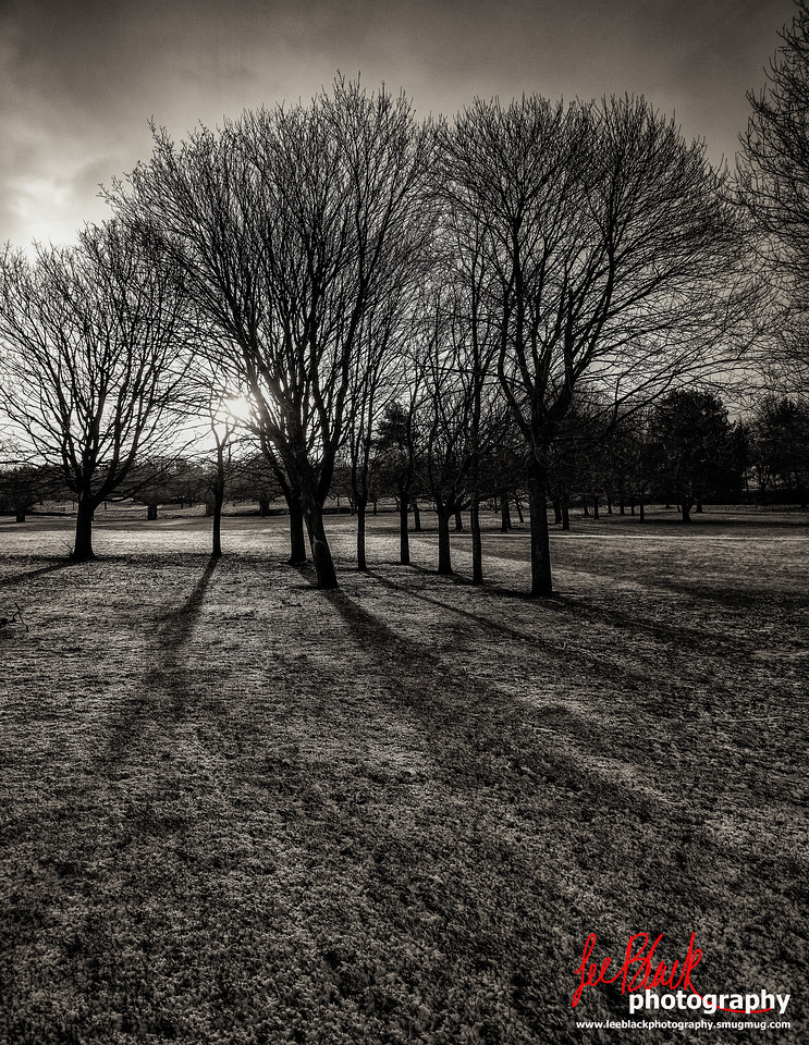 Trees in the Sunrise at Finlathen Park, Dundee