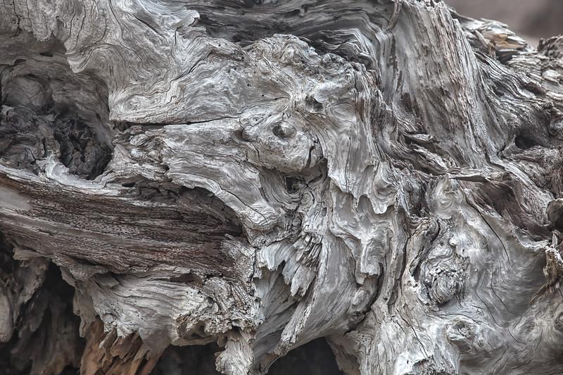 Driftwood Detail #2