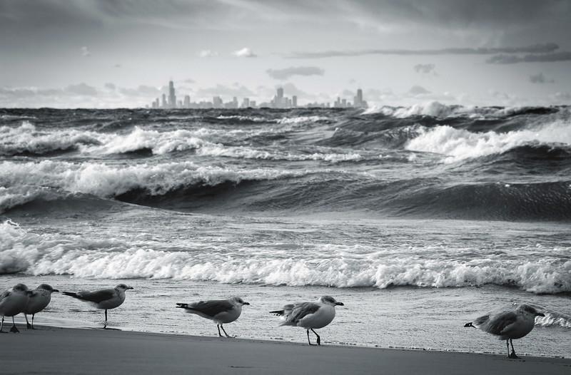Seagulls & Skyline