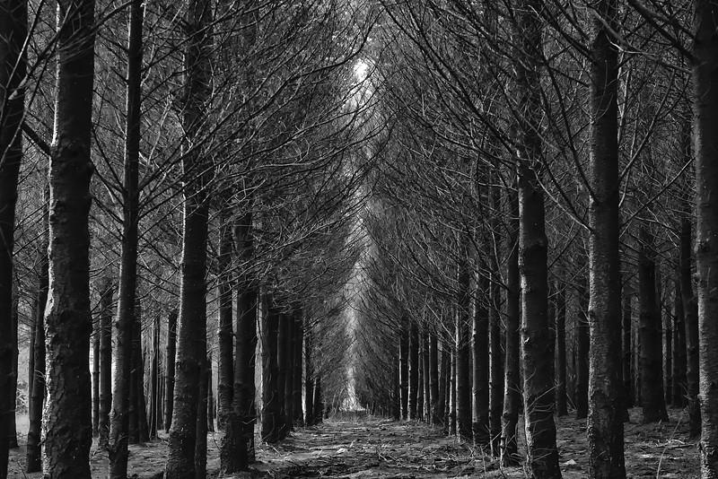 Deep in the winter woods