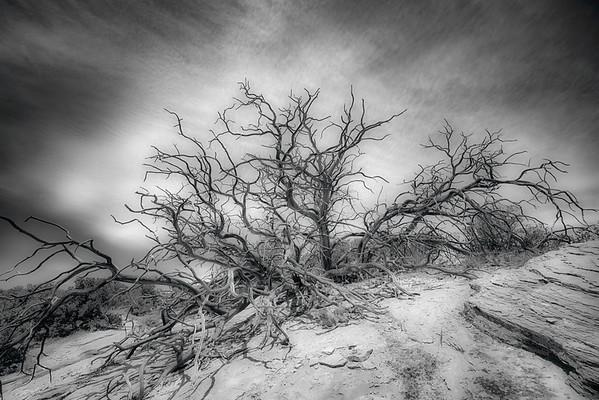 Spooky Tree Canyonlands
