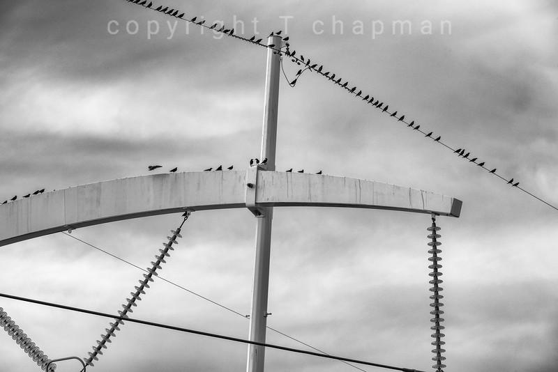 Insulating Birds