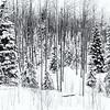 Winter - Santa Fe III
