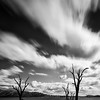 Trees in Lake Hume