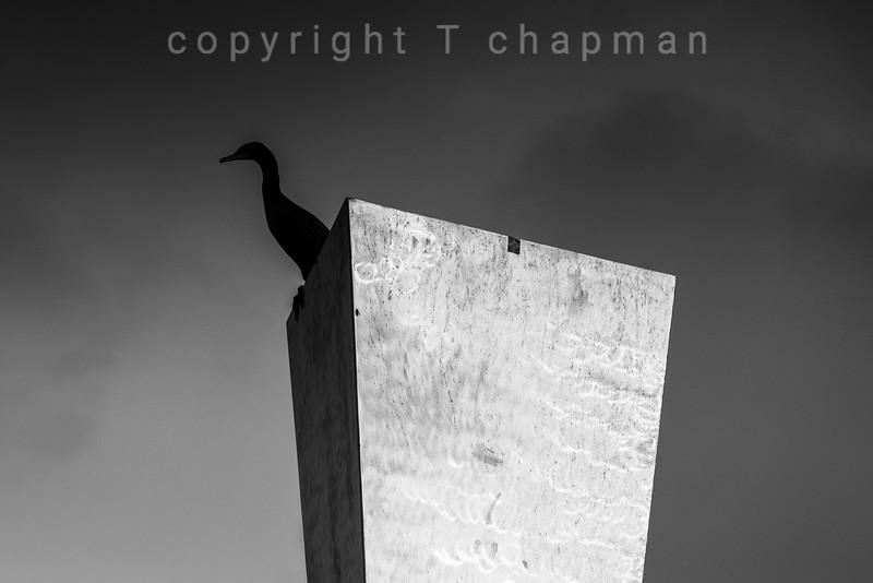 Cormorant on Hyperbolic Obelisk