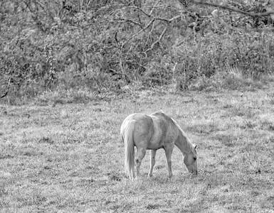 Beige Horse BW