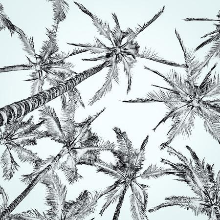 Up - Hawaiian Palm Trees