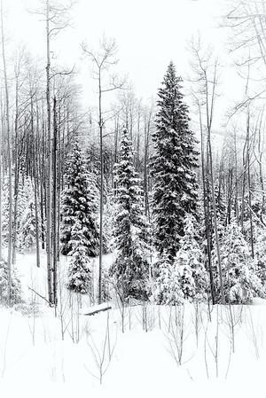 Winter - Santa Fe II