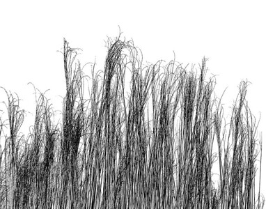 Black Grass On White
