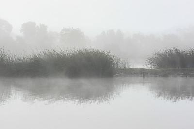 Foggy Morning At San Joaquin Marsh