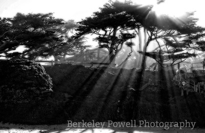 Morning Fog & Sun Rays