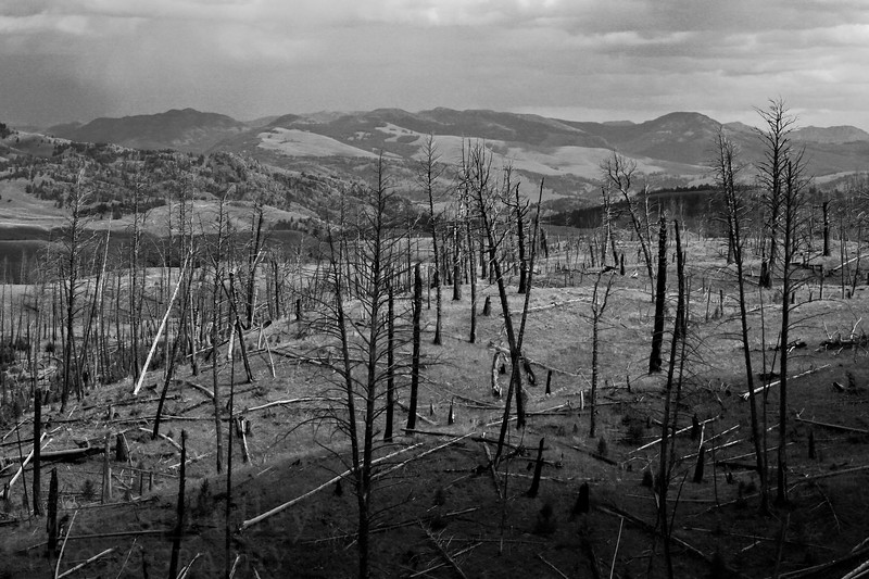 Remains from a forest fire at the Blacktail Plateau Drive.  Photo by Kyle Spradley | www.kspradleyphoto.com
