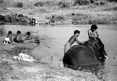 Elephant Bathing at Mudumalai Wild Animal Sanctuary, India