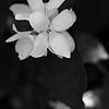 Flower, Magnuson Park 2014
