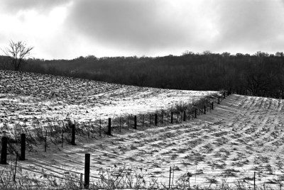 Frozen Fields